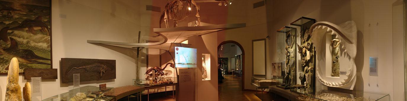 MfN Dauerausstellung R213 01