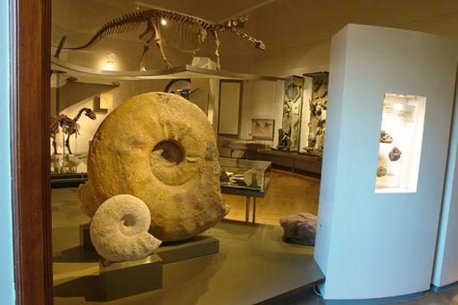 Museum für Naturkunde Stadtökologie03