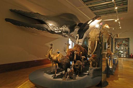 Museum für Naturkunde Stadtökologie01