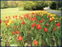Tulpenfest im Elbauenpark, �MVGM