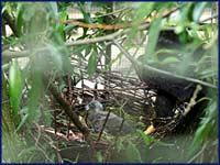 Weißkopfadler, © Zoo
