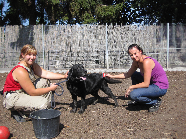1 Auszubildende*n für den Ausbildungsberuf Tierpfleger*in - Fachrichtung:  Tierheim und Tierpension