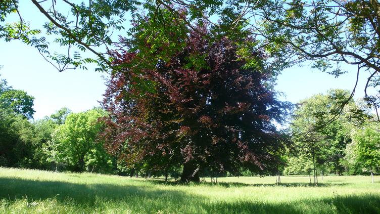 Interner Link: aktuelle Baumfällarbeiten SFM