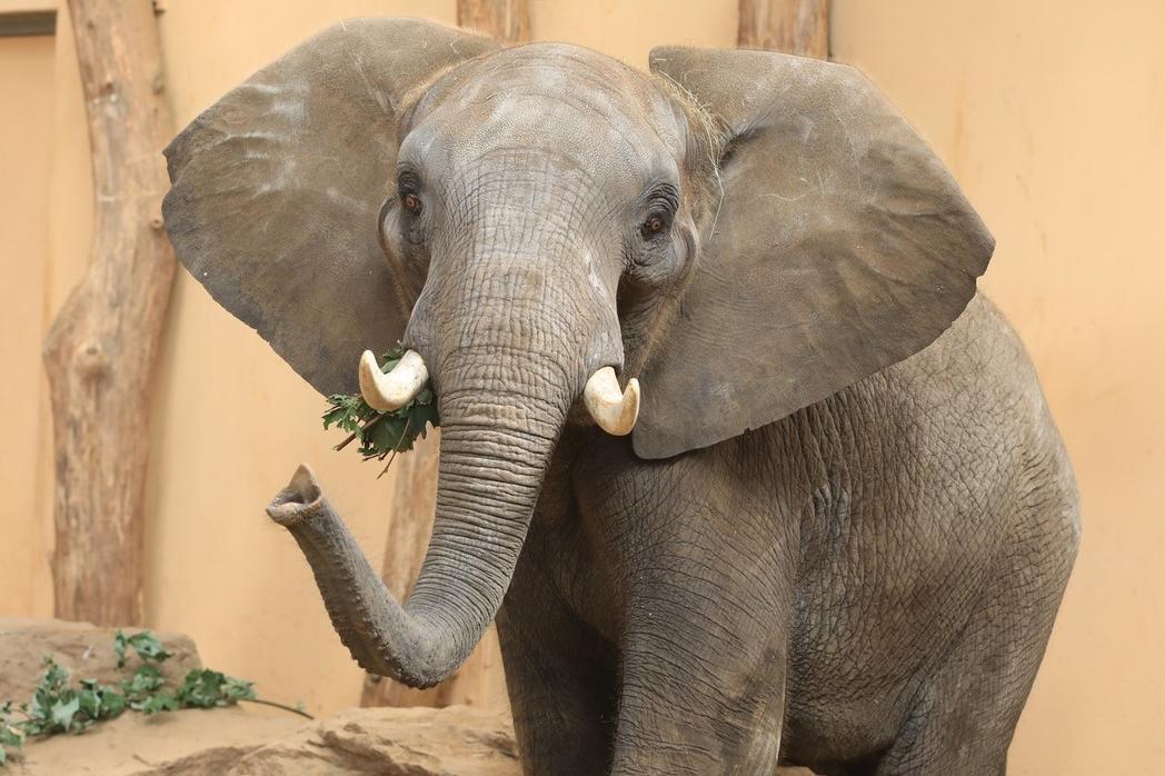 Elefant im Zoo @Magdeburg Marketing