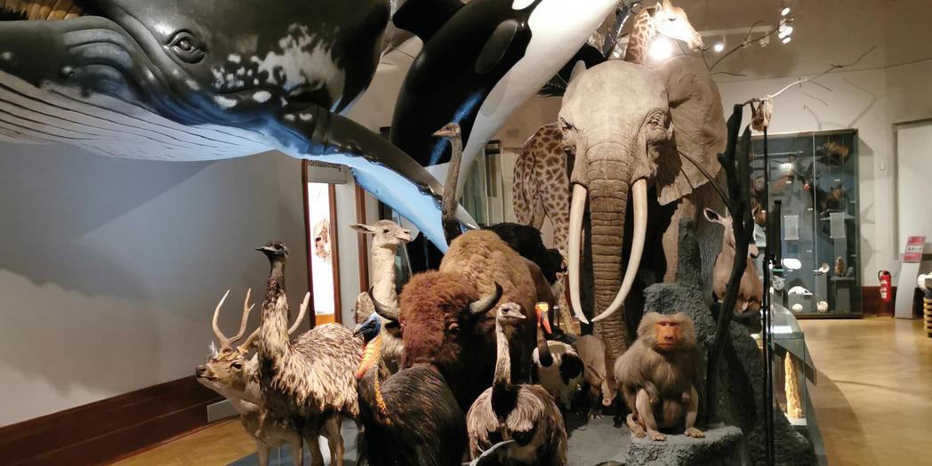 Naturkundemuseum ©Magdeburg Marketing