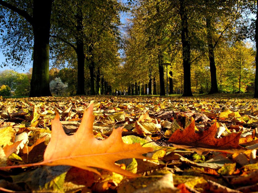 Parks in Magdebrg © www.AndreasLander.de