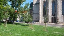 Apfelbäume vor der Johanniskirche in Magdeburg